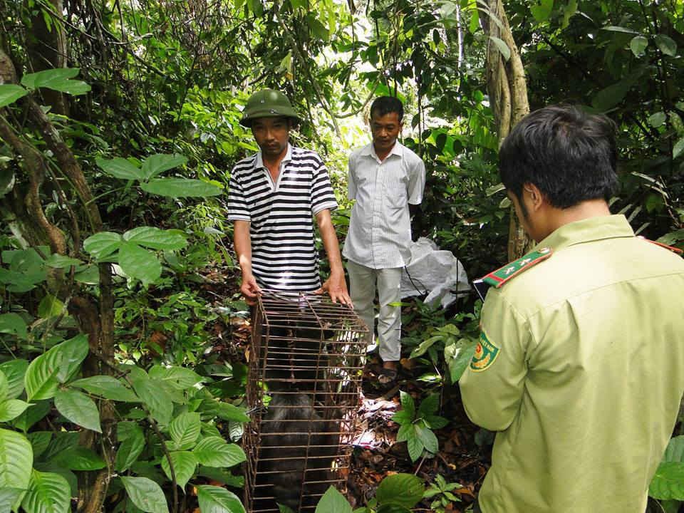 Các cá thể rùa và khỉ được thả về tự nhiên