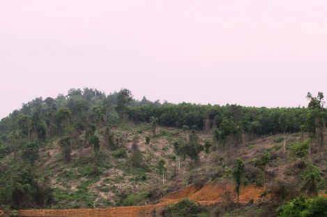 Tự ý  phá rừng đầu nguồn Khe Đá
