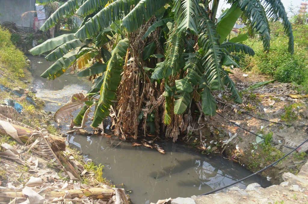 Dưới khe có nhiều con lăng quăng sinh sống, rác thải tràn ngập, bụi cây hai bên bờ rậm rạp