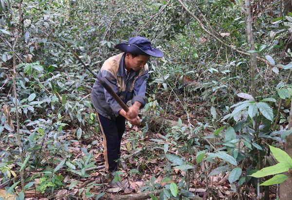 Người dân ở thôn Quảng An (xã Đạo Nghĩa, huyện Đắk R'lấp, Đắk Nông) tích cực tham gia phát dọn rừng