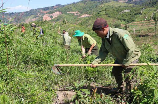 Đồng bào ở xã Đắk Som cùng kiểm lâm Khu BTTN Tà Đùng tham gia dọn cỏ, trồng rừng