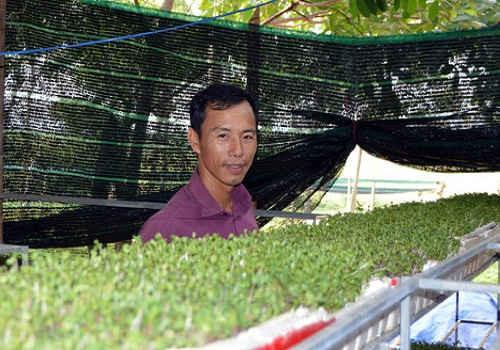 Anh Lê Văn Quả với giàn rau mầm được trồng trên giá thể xơ dừa. Ảnh: P.P