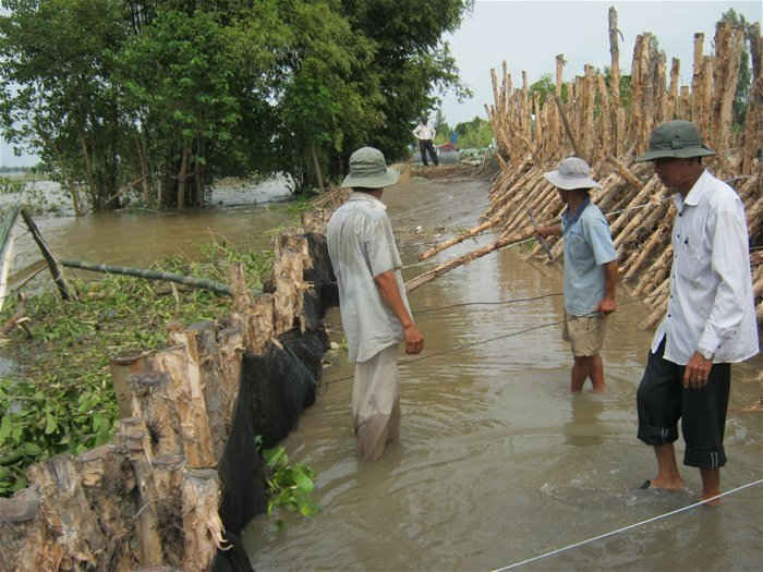 Cảnh đắp đê cứu lúa vụ 3 trong tiểu vùng tứ giác Long Xuyên thuộc địa phận tỉnh An Giang.
