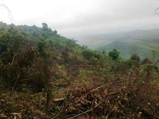 Để xảy ra tình trạng phá rừng Khe Si Chủ UBND xã Hóa Tiến và Hóa Hợp bỉ kỷ luật khiển trách( Ảnh minh họa)