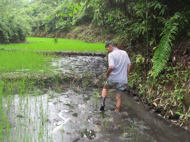 Nhiều diện tích ruộng của người dân bị bùn than bồi lấp.