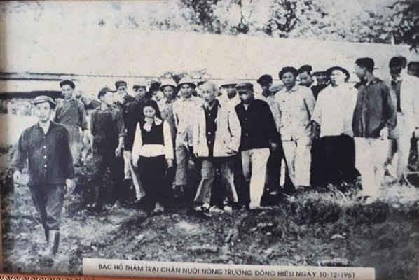 Ông Phạm Xuân Liên (người đi đầu) vinh dự được dẫn Bác Hồ đi tham quan khu trại chăn nuôi lợp của nông trường Đông Hiếu.