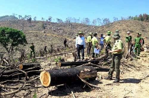 Rừng tự nhiên tại xã An Hưng, huyện An Lão bị tàn phá nghiêm trọng