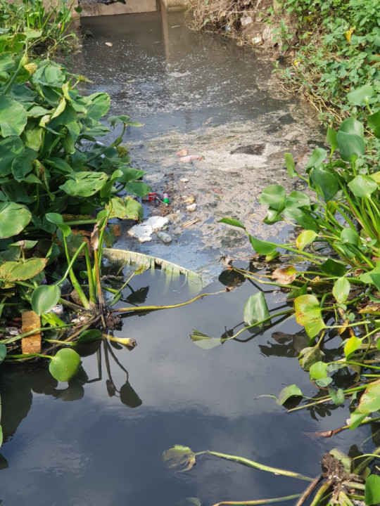 Mương nước thải chảy từ Công ty Sơn Tùng.