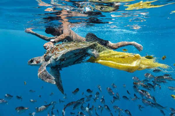 """""""Bảo vệ Rùa"""", tác phẩm đoạt giải của nhiếp ảnh gia môi trường Jing Li. Trong bức ảnh, một người đàn ông đang cố gắng giải cứu một con rùa bị mắc kẹt do ô nhiễm"""