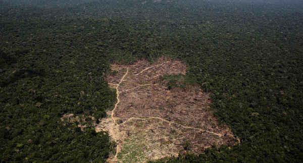 Toàn cảnh từ trên không của một khu rừng Amazon gần đây đã bị chặt phá đến trơ trọi bởi những kẻ khai thác gỗ và nông dân gần thành phố Novo Progresso, Brazil vào ngày 22/12/2013. Ảnh: Reuters