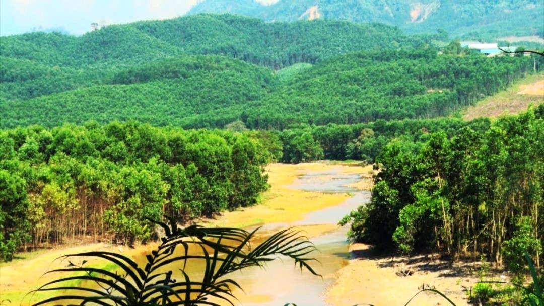 Tỉnh Quảng Nam khuyến khích các tổ chức, hộ gia đình, cá nhân liên kết đầu tư trồng rừng gỗ lớn, cấp chứng chỉ rừng, chế biến lâm sản theo chuỗi giá trị