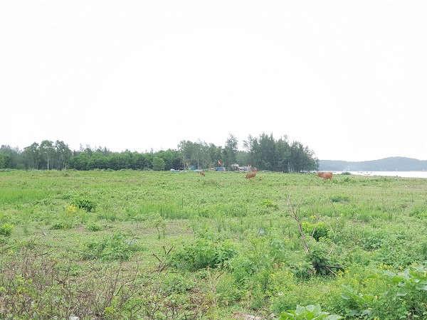 Khu biệt thư Hùng Sơn của Công ty Văn Phú tại xã Quảng Hùng và Quảng Đại, thành phố Sầm Sơn hàng chục năm nay vẫn nằm trên giấy