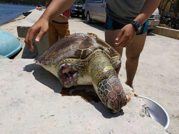 cá thể rùa bị giết