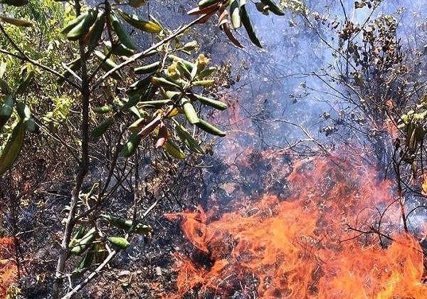 Rừng sim, mua cũng bị cháy tại núi Thành (huyện Hưng Nguyên)