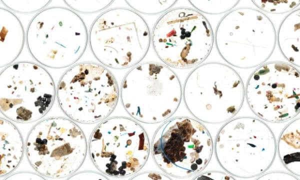 Vấn đề kích thước: Hạt vi nhựa được tìm thấy trong thực phẩm và nước của chúng ta và gây hại cho động vật hoang dã và môi trường. Ảnh: Alex Hyde / Greenpeace / PA