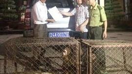 VQG Hoàng Liên (Sa Pa) tiếp nhận 2 cá thể khỉ mặt đỏ quý hiếm
