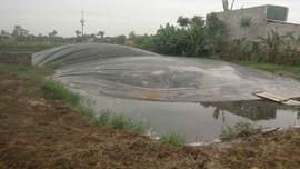 Nga Sơn (Thanh Hóa): Hai trại lợn xả thải trực tiếp ra môi trường