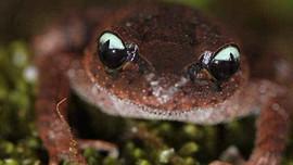 Phát hiện nhiều loài lưỡng cư quý hiếm trong Vườn quốc gia Hoàng Liên (Sa Pa)