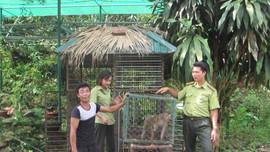 Sa Pa: Người dân hiến tặng  2 cá thể khỉ vàng quý hiếm cho Vườn quốc gia Hoàng Liên