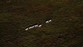 Đức, Anh cấp 153 triệu USD cho chương trình chống BĐKH và nạn phá rừng Amazon