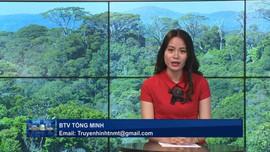 Chi trả dịch vụ môi trường rừng giúp nâng cao hiệu quả quản lý bảo vệ rừng