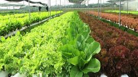 Khởi nghiệp từ nông nghiệp hữu cơ