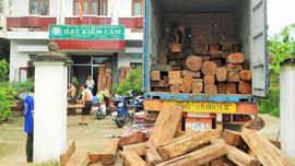 Quản lý, bảo vệ rừng tại huyện Phù Mỹ (Bình Định): Bám sát địa bàn, kịp thời xử lý