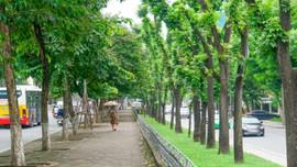 Xây dựng đề án bảo tồn và phát triển hệ thống cây xanh đô thị giai đoạn 2019 - 2025
