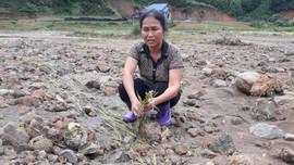 Thái Nguyên: Mưa lớn nhiều diện tích lúa chiêm đang chín bị chìm trong nước thải