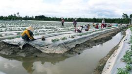 ĐBSCL: Chủ động để thích nghi với tình hình khan hiếm nguồn nước