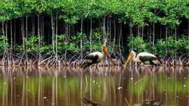 Thi vẽ tranh rừng ngập mặn bảo vệ cuộc sống