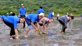 Tỉnh đoàn Quảng Ngãi có kế hoạch trồng 4.040 cây phân tán trong năm 2019