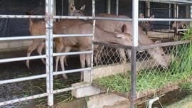 Bình Định: Quản lý chặt hoạt động nuôi động vật hoang dã, quý hiếm