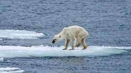 Khủng hoảng khí hậu và phản ứng của các bên