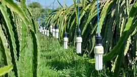 Bình Thuận: Quản lý chất thải nguy hại tại các nhà vườn thanh long