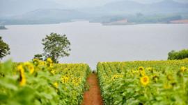 """Bí kíp """"bỏ túi"""" khi đến cánh đồng hoa hướng dương lớn nhất Việt Nam tại Nghệ An"""