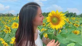 """Giới trẻ """"ngất ngây"""" với cánh đồng hoa hướng dương ở Quảng Nam"""