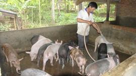 Hướng đi mới quản lý toàn diện chất thải chăn nuôi