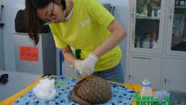 Nỗi niềm bác sĩ thú y chăm sóc động vật hoang dã