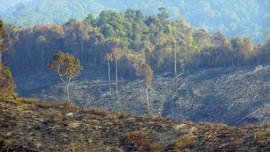 Điều tra vụ cháy rừng phòng hộ tại Quảng Nam