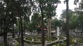 TP.HCM: Triển khai các giải pháp đảm bảo an toàn hệ thống cây xanh