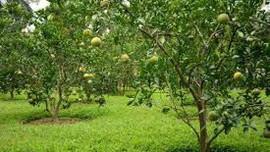 Đất vườn và đất trồng cây lâu năm khác nhau thế nào?
