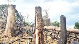 Huế: Kỷ luật các kiểm lâm viên để xảy ra phá rừng