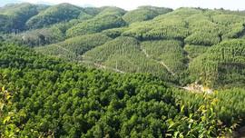 Thống nhất thành phần hồ sơ chuyển mục đích sử dụng đất trồng lúa, đất rừng để thực hiện dự án