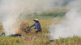 Hà Nội bắt đầu kiểm tra tình trạng đốt rơm rạ gây ô nhiễm không khí