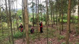 Quảng Ninh đẩy mạnh trồng rừng gỗ lớn theo hướng bền vững
