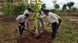 Gia Lai: Phát động trồng hơn 4.000 cây phân tán