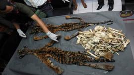Rửa tiền và buôn bán động vật hoang dã bất hợp pháp