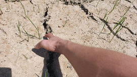 Nghệ An: Hơn 11 nghìn ha cây trồng bị hạn, thiếu nước