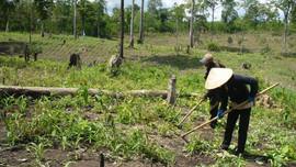 Thu hồi đất kém hiệu quả tạo tư liệu sản xuất cho đồng bào dân tộc thiểu số